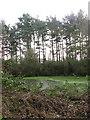 TG1024 : Pond on woodland edge by Evelyn Simak