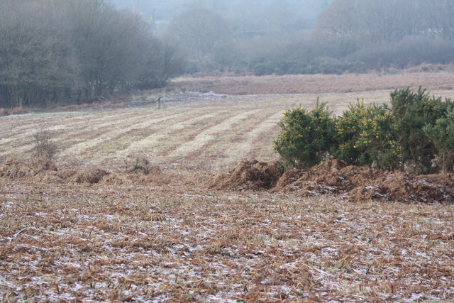 Ditchling Common showing cut bracken