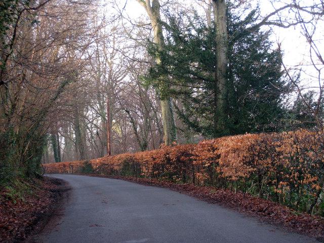 Lane near Cowden
