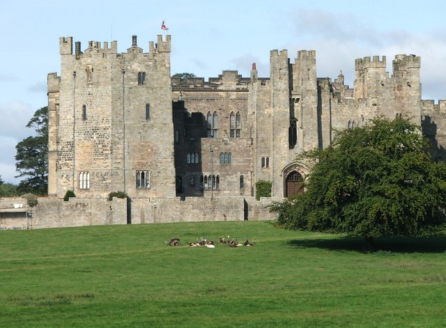 Deer at Raby Castle