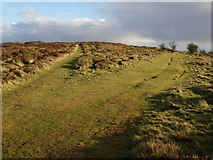ST1734 : Paths on Lydeard Hill by Derek Harper