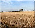 TG2229 : A stubble field by Evelyn Simak