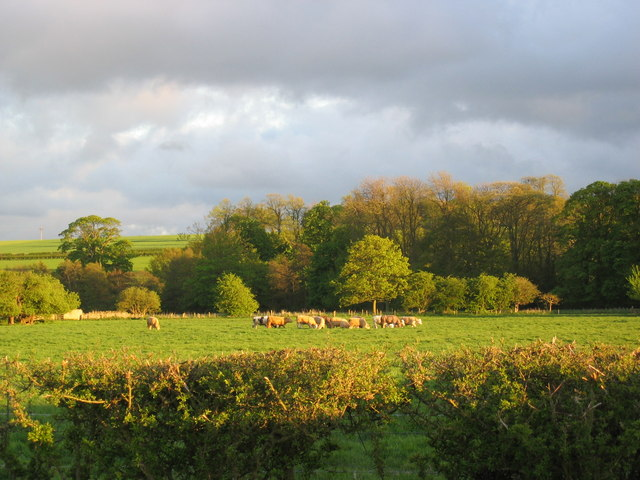 Autumn Meadows at Nunnington Hall