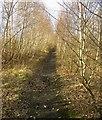 SE3907 : The disused railway line near Cudworth by Steve  Fareham