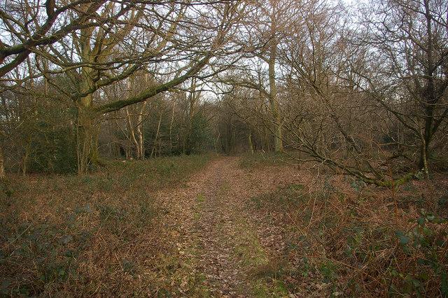 Woodland south of Mogador
