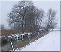 TM0756 : Wintry walk by the River Gipping by Andrew Hill