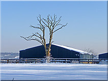 TQ2996 : Dead tree and barn, South Lodge Farm, Enfield by Christine Matthews