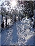 TQ2996 : Footpath, Trent Park, Enfield by Christine Matthews