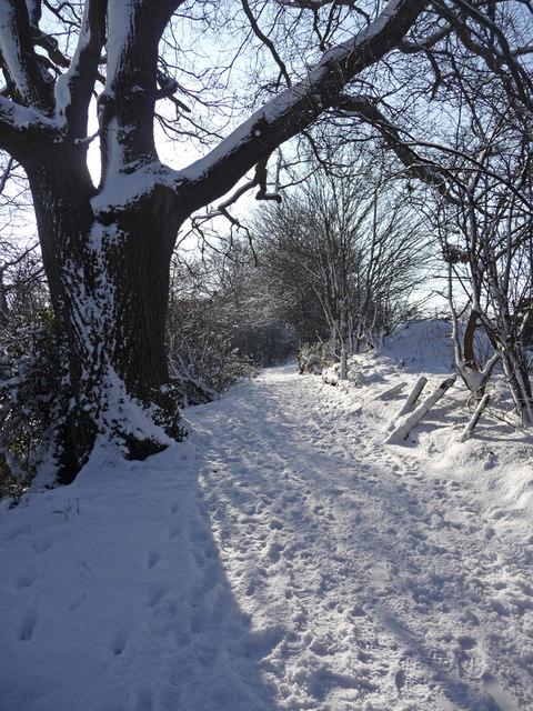 Oak tree, Trent Park, Enfield