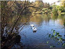 TQ2686 : Vale of Health Pond by Alasdair Addison