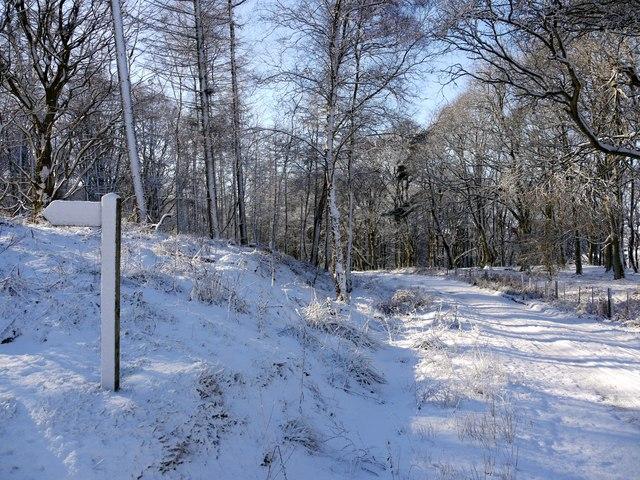 Track south-east of Cartington