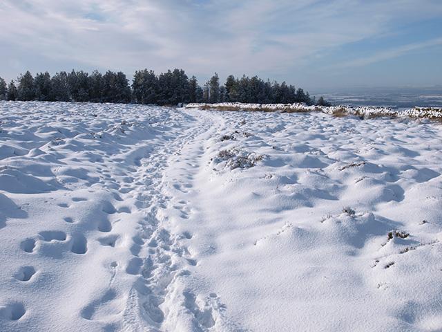 Footpath, Newton Moor