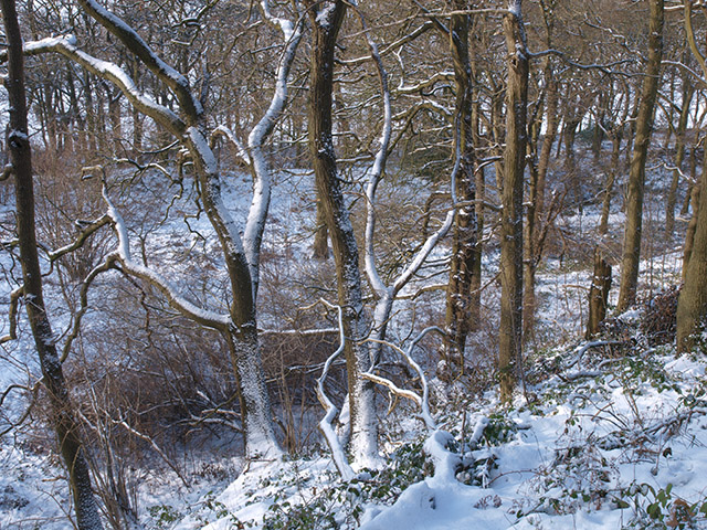 Newton Wood in the snow