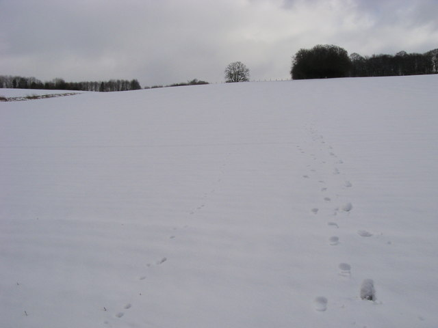 Snowy Footpath up the hill