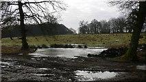 SU8429 : Frozen pond at Shufflesheeps by Shazz