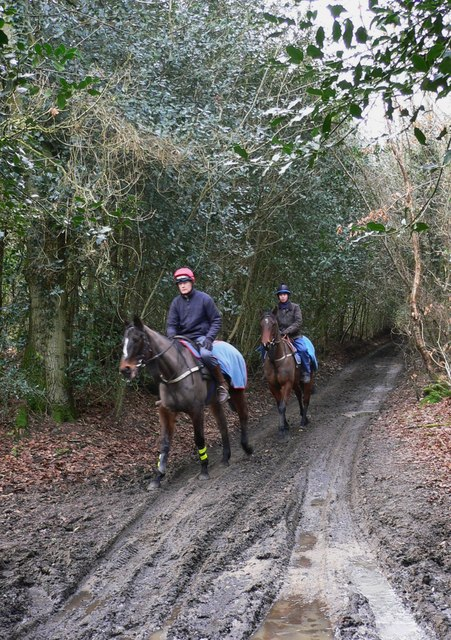 Horses and riders on the Sussex Border Path/Serpent Trail