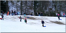 NJ0459 : Sledging at Forres by Ann Harrison