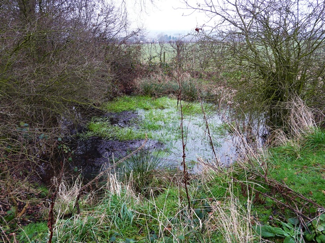 Pond on Cowley Hill