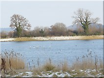 SK5031 : Gravel pits by Pasture Lane by Andy Jamieson