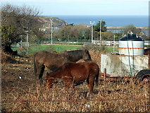 SM9537 : Horses and magpies by ceridwen