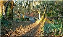 J4681 : Winter sun, Crawfordsburn Country Park by Albert Bridge