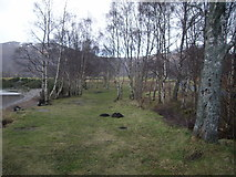NN6557 : Birch trees on the shore at Loch Rannoch by Nick Mutton