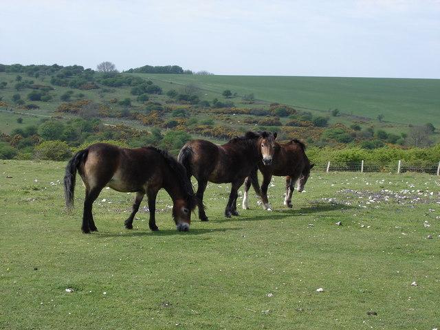 horses on Lullington Heath