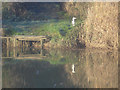 SO9041 : Heron near Bourne Farm - 2 by Trevor Rickard