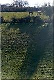 SU6578 : Towards Pathhill Farm by Graham Horn