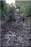 SU6479 : Bridleway at Whitchurch Hill by Graham Horn