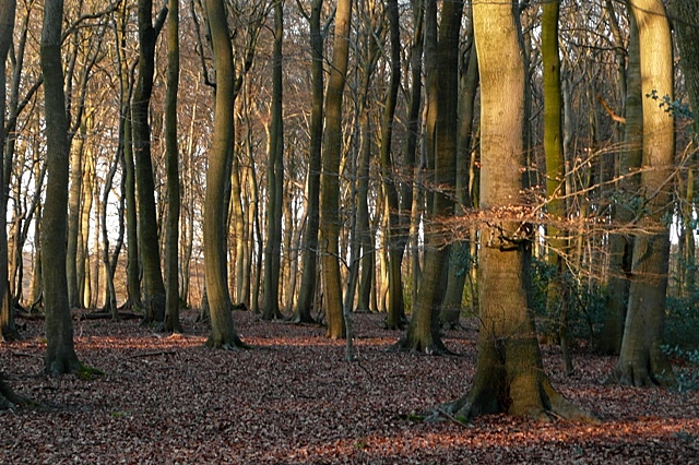 Little College Wood