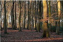 SU6679 : Little College Wood by Graham Horn