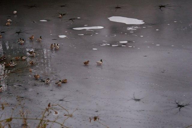 Ducks On the Frozen Ladybower Reservoir