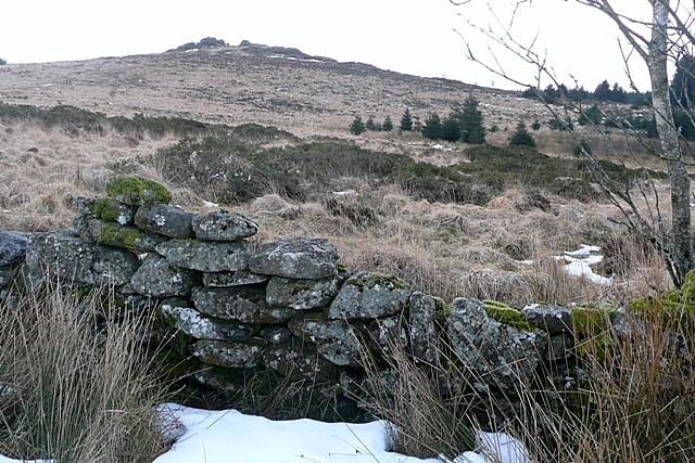 Towards Bellever Tor