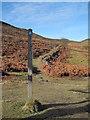 SJ1563 : View of the Bridleway towards Offa's Dyke Path by David Quinn