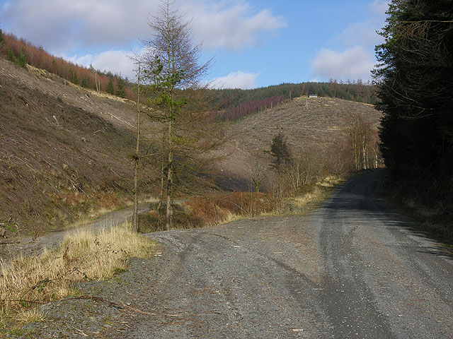 Forestry road junction