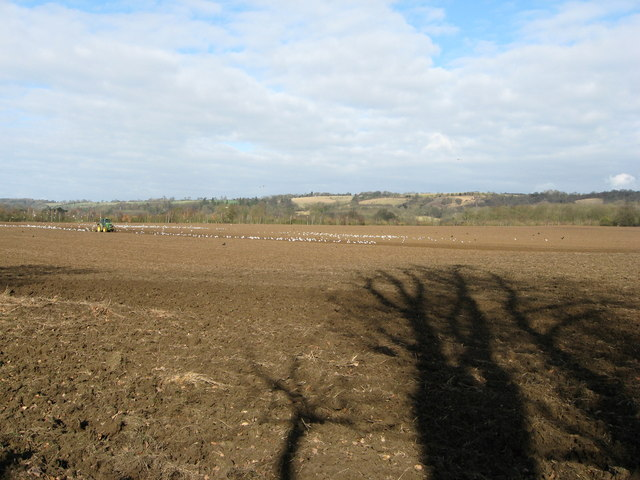 Tractor ploughing field with lots of gulls