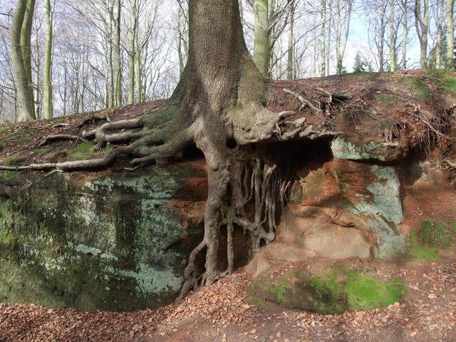 Tree on sandstone