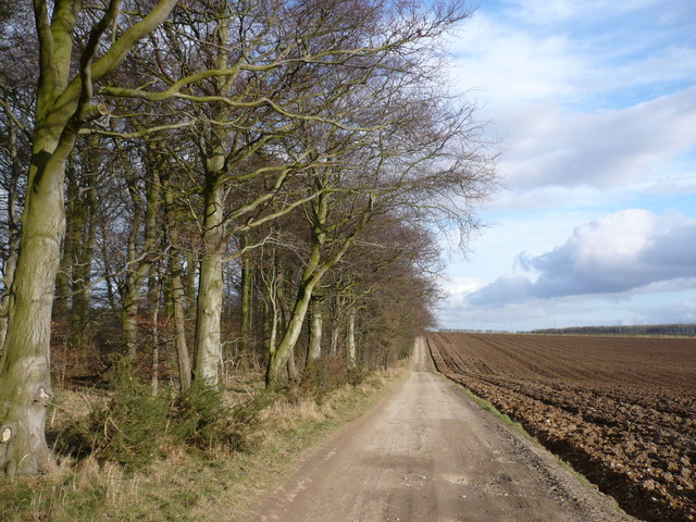 Earth and chalk track to Jackson and St Hilda's Wold