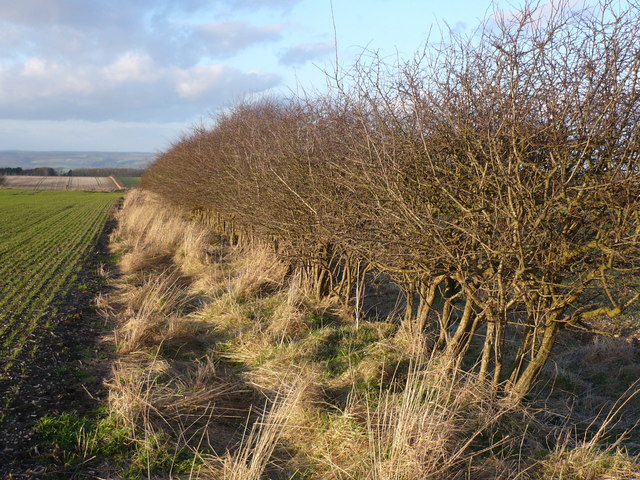 Field boundary on West Heslerton Wold