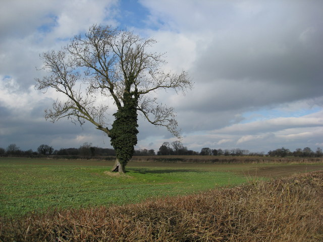 Clowne - View across fields from Hickingwood Lane