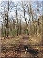 SP8807 : The Path beside Boddington Banks by Chris Reynolds
