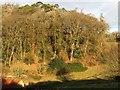 SX8561 : Buttshill Copse by Derek Harper
