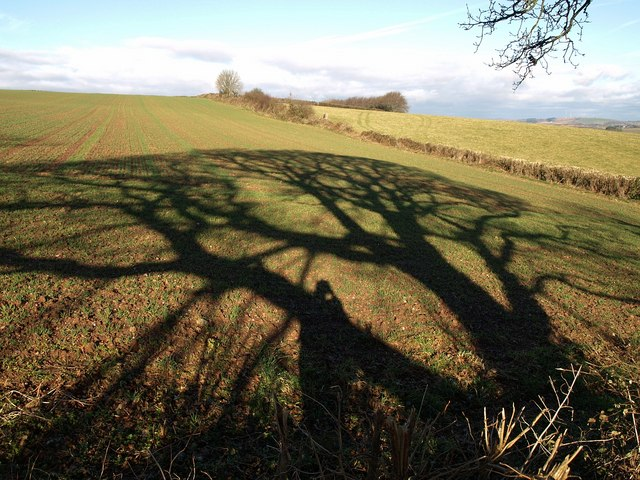 Shadow by Combe Lane