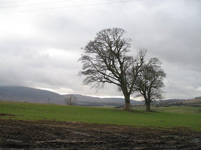 Hilltop trees, Hillhead