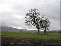 NS9740 : Hilltop trees, Hillhead by Richard Webb