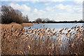 TL4284 : Angling lake at Block Fen by Bob Jones
