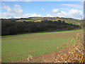 SO4320 : Woodland along Black Brook by Pauline E