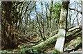 SU3075 : Membury Hillfort – the ramparts by D Gore