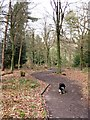 SP8909 : All Ability Trail, Wendover Woods by Chris Reynolds